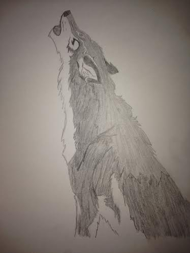 wolf with shading