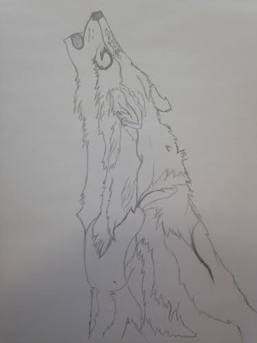 wolf without shading